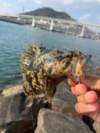 まさかまさかの予想外のデカカサゴ - 広島の〜中学生Seabass angler