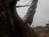 しるしばかりの雪が降る - 冬青窯八ヶ岳便り