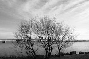冬の琵琶湖 -