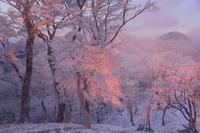 美しき夜明け一ノ峠~天川辻 - 峰さんの山あるき
