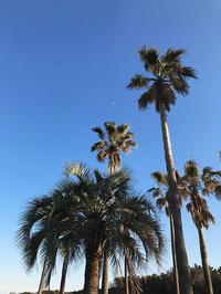 のんちゃんと冬の海① - Kokiary@ のどかへつなぐ happy days