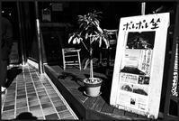 中野-24 - Camellia-shige Gallery 2