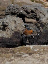 アトリはこんな写真も撮れました - コーヒー党の野鳥と自然 パート2