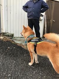 柴犬ジョンくん - gin~tetsu~nosuke