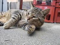 得意技 - 猫背の話し