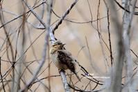偶然にもアリスイ - azure 自然散策 ~自然・季節・野鳥~