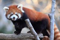 1月22日(火)トキメキ - ほのぼの動物写真日記