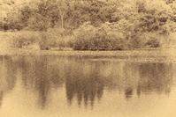 モノクロ風景いもり池 2 - 光 塗人 の デジタル フォト グラフィック アート (DIGITAL PHOTOGRAPHIC ARTWORKS)