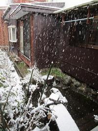 今朝から雪 - ごまめのつぶやき