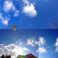 1/21(月)②        今空。 - Evergreen. ~常磐に唐草、庭の花~
