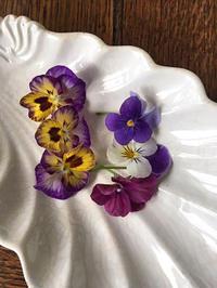 パンジーの髪飾り~くちばしクリップで - 布の花~花びらの行方 Ⅱ