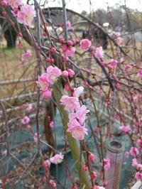 春を先取り💞 - takakomamaのキルトパラダイス