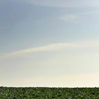 三浦の彩り大根の半島 - スナップ寅さんの「日々是口実」