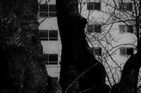 窓 - フォトな日々