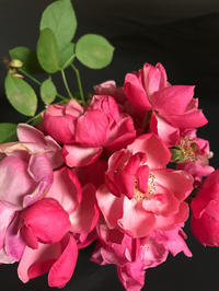 ゆっくり庭仕事できる、久しぶりのいつもの生活 - piecing・針仕事と庭仕事の日々