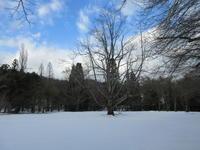 雪情報 - くつきの森フォトレター