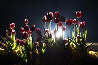 光溢れる - Today's one photograph