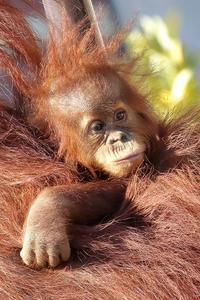 もうじき1歳のポポちゃんは、まだ甘えん坊(市川市動植物園) - 旅プラスの日記