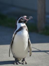 ペンペンと冬のペンギンヒルズ - bonsoir