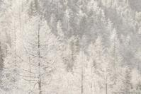輝く森の気 - ひつじ雲日記