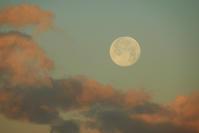 翌朝の月 - ヒグラシの日記  (あぁ、しあわせな日々)