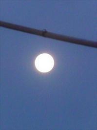 月も見守る二人の苦労 - hibariの巣