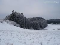 ハイジの日 - 黒い森の白いくまさん