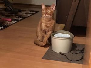 チロVS茶タロウ - 「両手のない猫」チビタと愉快な仲間たち