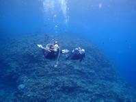1月19日久しぶりに良くなったうちに体験ダイビング - 沖縄・恩納村のダイビング・青の洞窟体験ダイビング・スノーケルご紹介