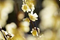 大阪城梅林@2019-01-17 - (新)トラちゃん&ちー・明日葉 観察日記
