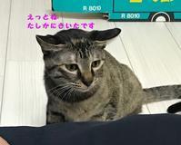 川口探検隊 - 八幡地域猫を考える会