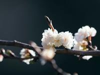 新宿御苑冬の桜たち - 光の音色を聞きながら Ⅳ