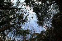 アベマキの樹皮 - ほそみち日記