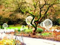 クリスマスの名残は不思議な世界 - 花散歩写真 in Vancouver