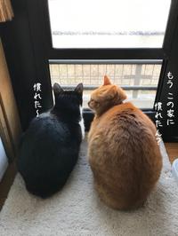 好きな場所で - gin~tetsu~nosuke