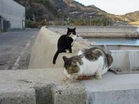 俺、食べない - 猫背の話し