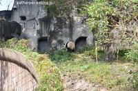 2018年11月成都大熊猫繁殖研究基地その8陽ちゃんの食事 - ハープの徒然草