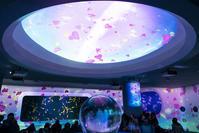 可愛い新江ノ島水族館のバレンタイン - エーデルワイスPhoto