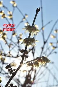 冬空の彩り(その7) - ジージーライダーの自然彩彩