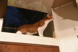 猫神様はサービス精神旺盛 その47 親子再会 - りきの毎日