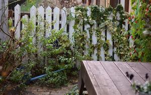 お庭のフェンスを替えました - my story***