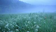 腐海~親海湿原のドクゼリ~ - 拙者の写真修行小屋
