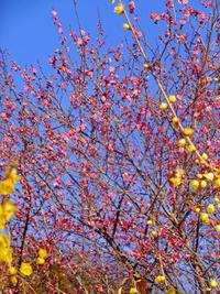 本焼き窯出し1月23日(水) - しんちゃんの七輪陶芸、12年の日常