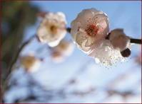 春の兆し - PHOTO GALLERY Y&S MAKING