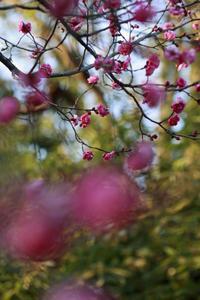今日の向島百花園ユリトウバイシロカガ - みるはな写真くらぶ