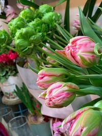 チューリップのハイシーズンです! - ルーシュの花仕事