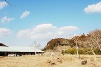 冬が好きな虫たち - 千葉県いすみ環境と文化のさとセンター