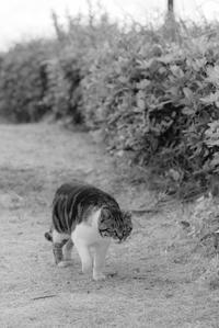 吾輩は猫である 5 - 気ままにお散歩
