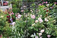 セプタードアイルの誘引2018 - my small garden~sugar plum~