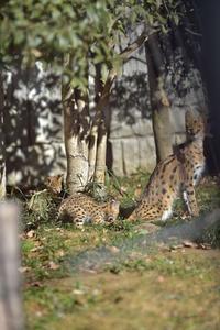 11月28日生まれの双子 - 動物園へ行こう